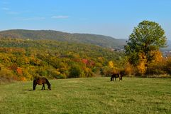 Horses in the meadow. Horses grazing in the meadow in the autumn Stock Photo