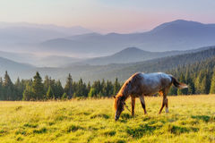 Horses on the meadow in the mountains Stock Photography