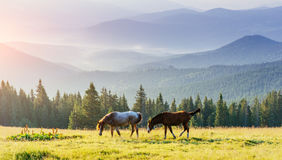 Horses on the meadow in the mountains Royalty Free Stock Image