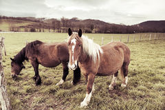 Horses at meadow Stock Photo