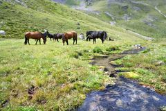 Horses at the meadow near stream,Caucasus mountain Stock Photography