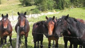 Horses in the meadow stock video footage