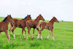 Horses in meadow stock photo