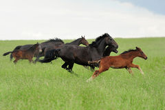 Horses in meadow royalty free stock photo