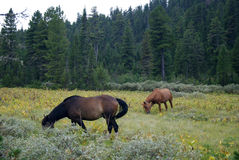 Horses in the meadow Stock Photo