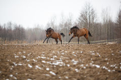 Horses on the meadow Stock Images