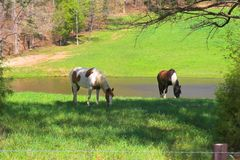 Horses & meadows 2a Royalty Free Stock Images