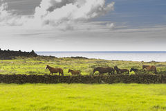 Horses in the meadows and the ocean Royalty Free Stock Image
