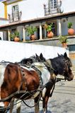 Horses in the medieval city of Obidos in Portugal Royalty Free Stock Image
