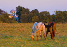 Horses on the medow Royalty Free Stock Images