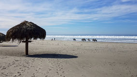 Horses on Mexican Pacific Coast Stock Images