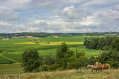 Horses  in Midi Pyrenees Royalty Free Stock Images