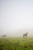 Horses in the mist. In Pirineos (Spain Stock Photo
