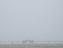 Horses In The Mist Stock Image