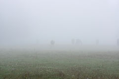 Horses in the mist. Royalty Free Stock Image