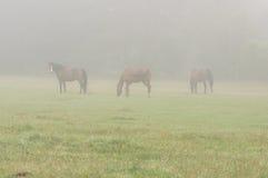 Horses in the mist. Stock Photos
