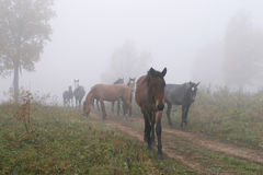 Horses in the mist Royalty Free Stock Images