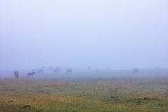 Horse in the Mist Royalty Free Stock Photos