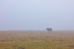 Horses in the mist Royalty Free Stock Photography