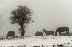 Horses in misty landscape Stock Photo