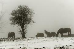 Horses in misty landscape stock photo