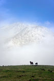 Horses on misty mountains. With beautiful light Royalty Free Stock Photo