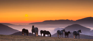 Horses on misty pasture at sunrise