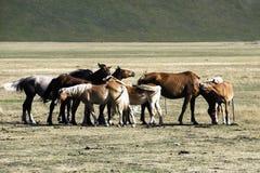 Horses, Monti Sibillini Stock Images