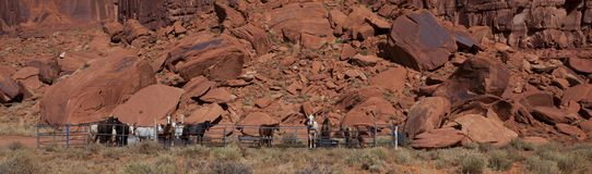 Horses in Monument Valley Royalty Free Stock Photos
