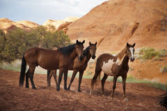 Horses in the Monument Valley, arizona, USA Stock Images
