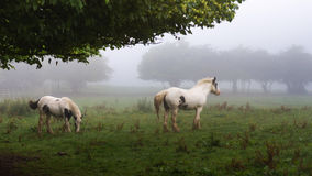 Horses in the morning field Stock Photo