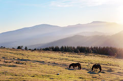 Horses at the morning on mountains with beautiful light Royalty Free Stock Images