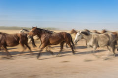 Horses Motion Blur herded into the corral. Mist of airborne dust Stock Images