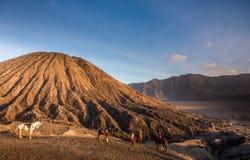 Horses at Mount Batok, Indonesia Royalty Free Stock Photo