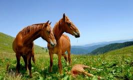 Horses in mountain Royalty Free Stock Photo