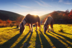 Horses in the mountain Royalty Free Stock Photography