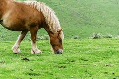 Horses on the mountain Stock Photo