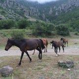 Horses on mountain Stock Photos