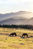 Horses in the mountain with haze at morning Royalty Free Stock Photos