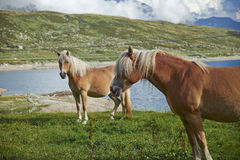 Mountain horses Stock Photo