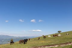 Horses on a mountain, near some small trees and beneath a big b. Lue sky with white clouds stock photo