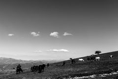 Horses on a mountain, near some small trees and beneath a big sk. Y with white clouds royalty free stock photography