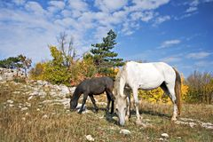 Horses on the mountain plateau Royalty Free Stock Image