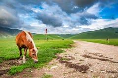 Horses in mountain ranch, Umbria Stock Photos