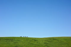 Horses on the mountain ridge Royalty Free Stock Image