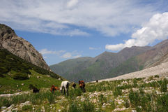 Horses and mountain river Royalty Free Stock Photos