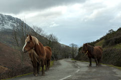 Horses in Mountain Road Royalty Free Stock Photo