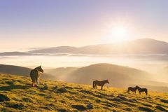 Horses in the mountain at sunset. Horses in the mountain at the sunset stock photo