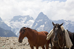 Horses on the mountain top Royalty Free Stock Photos