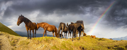 Horses on the mountain top Stock Photography